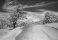 MP-1998.2.15N | infrared image, road on Mount Royal, Montreal, QC, 1947 | Photograph | Russell Bartlett |  |