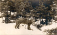 1988.87.4   In the Woods, New Brunswick   Photograph   Harry F. Albright     