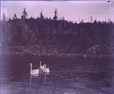 1989.181.13 | Swans in Lily Lake, Rockwood Park, Saint John, New Brunswick ? | Photograph | Frederick Doig, Canadian, 1875-1949 |  |