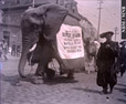 1989.181.43 | Circus Elephant on Main Street or Douglas Avenue, Saint John, New Brunswick | Photograph | Frederick Doig, Canadian, 1875-1949 |  |