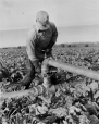 19760203047 | Farmier assemblant un tuyau d'irrigation | Photographie | Anonyme - Anonymous |  |