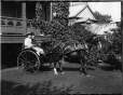 II-111123 | Miss Meighan's horse and carriage, Montreal, QC, 1895 | Photograph | Wm. Notman & Son |  |