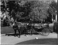 II-129554 | Mr. and Mrs. Gault in carriage, Sherbrooke Street, Montreal, QC, 1899 | Photograph | Wm. Notman & Son |  |