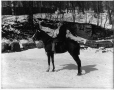 II-133319 | Mr. Watson and horse, Montreal, QC, 1900 | Photograph | Wm. Notman & Son |  |
