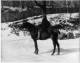 II-133320 | Mr. Watson and horse, Montreal, QC, 1900 | Photograph | Wm. Notman & Son |  |