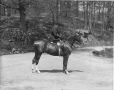 II-141863 | Mrs. Cooper and horse, Montreal, QC, 1902 | Photograph | Wm. Notman & Son |  |