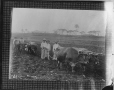 II-153773.0   Ploughing a field, Cuba, copied for Sir William Van Horne in 1905   Photograph   Anonyme - Anonymous     