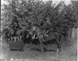 II-182048 | Mr. Shirley and horse, Montreal, QC, 1910 | Photograph | Wm. Notman & Son |  |