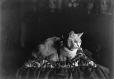 II-182473 | Le chat de Mlle Bury, Montréal, QC, 1910 | Photographie | Wm. Notman & Son |  |