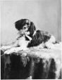 II-5406.1 | Le chien de F. J. Claxton, Montréal, QC, 1874 | Photographie | William Notman (1826-1891) |  |