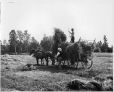VIEW-4462 | Haying at Pictou, NS, about 1908 | Photograph | Wm. Notman & Son |  |