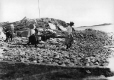 VIEW-4612 | Transport du poisson, Burgeo, T.-N., 1908 | Photographie | William McFarlane Notman |  |