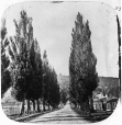 N-0000.193.61.1 | Avenue Mont-Royal Ouest depuis le Chemin Saint-Laurent, Montréal, QC, 1859 | Photographie | William Notman (1826-1891) |  |