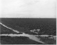 VIEW-8420   Farmland with irrigation ditches, Canadian North West Irrigation Co., Raymond, AB, 1904   Photograph   Wm. Notman & Son     