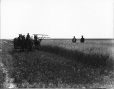 VIEW-8539 | Cutting grain on the Prairies, AB, about 1920 | Photograph | Wm. Notman & Son |  |