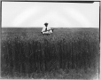 VIEW-8540 | Wheat field, AB, about 1920 | Photograph | Wm. Notman & Son |  |